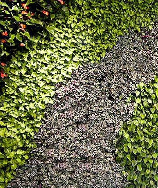 Green walls from Leaflike