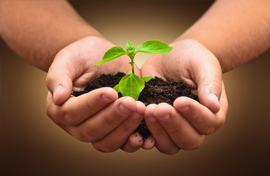 Plant being held in hands with soil