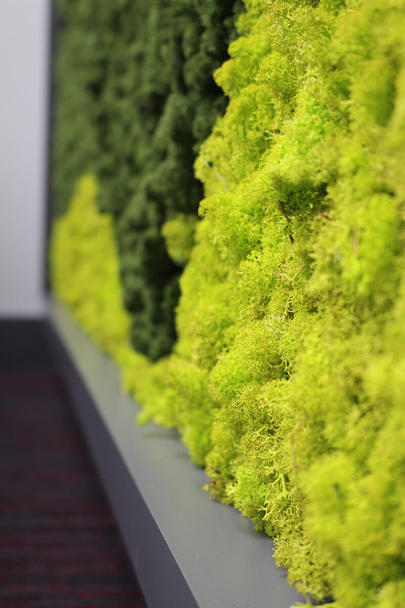 Moss Walls from Leaflike - Gallery Image 9